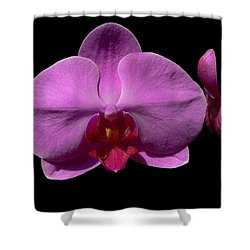 Pinkard Shower Curtain by Doug Norkum