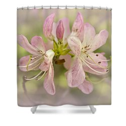 Pinkshell Azalea  Shower Curtain