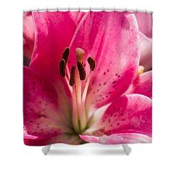 Pinky Swear 2 - Featured 3 Shower Curtain by Alexander Senin