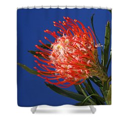 Pinny Shower Curtain