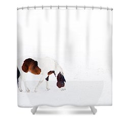 Pinto Pony Shower Curtain by Theresa Tahara