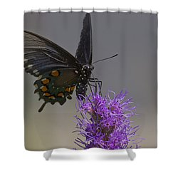 Pipevine Alights Shower Curtain by Shelly Gunderson