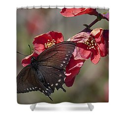 Pipevine Swallowtail And Roses Shower Curtain