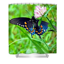 Pipevine Swallowtail Hanging On Shower Curtain