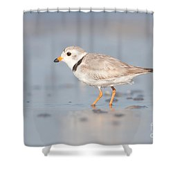 Piping Plover II Shower Curtain by Clarence Holmes