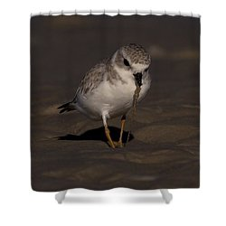 Piping Plover Photo Shower Curtain