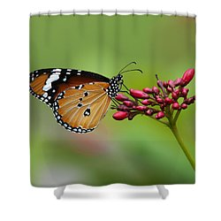Plain Tiger Or African Monarch Butterfly Dthn0008 Shower Curtain