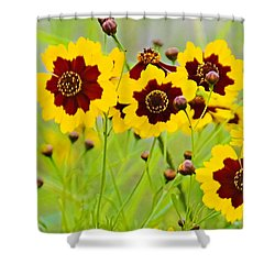 Plains Coreopsis Shower Curtain by Walter Herrit