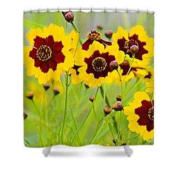 Plains Coreopsis Shower Curtain