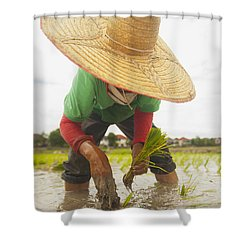 Planting New Ricechiang Mai Thailand Shower Curtain by Stuart Corlett