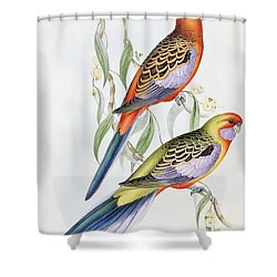 Platycercus Adelaidae From The Birds Of Australia Shower Curtain by John Gould