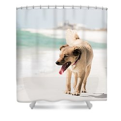Play Buddy Shower Curtain by Shelby  Young