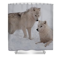 Shower Curtain featuring the photograph Play Time by Bianca Nadeau