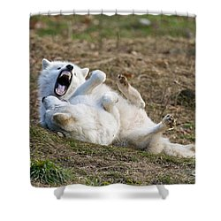 Shower Curtain featuring the photograph Playful Arctic Wolves by Wolves Only