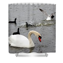 Playful Fun On The Lake Shower Curtain