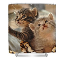 Playful Kittens Shower Curtain