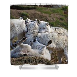 Shower Curtain featuring the photograph Playful Pack by Wolves Only