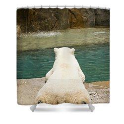 Playful Polar Bear Shower Curtain by Adam Romanowicz