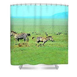 Playfull Zebras Shower Curtain by Sebastian Musial