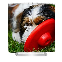 Playing Dog Shower Curtain
