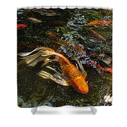 Playing Koi With Me Shower Curtain by Shannon Story