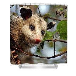 Playing Possum Shower Curtain by Nikolyn McDonald