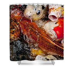 Shower Curtain featuring the photograph Please Feed Us  by Wilma  Birdwell