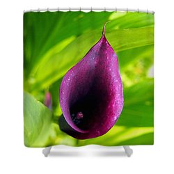 Plum Purple Calla Lilly Flower In The Garden Shower Curtain