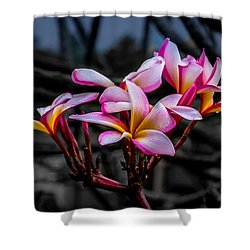 Plumeria Rainbow Ali Shower Curtain