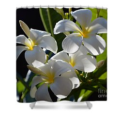 Shower Curtain featuring the photograph Plumeria's IIi by Robert Meanor