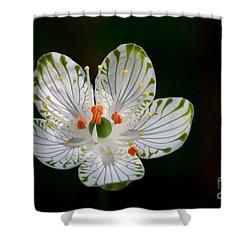 Pocosin Manifest #2 Shower Curtain by Paul Rebmann