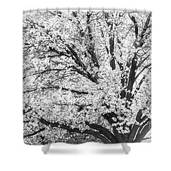 Shower Curtain featuring the photograph Poetry Tree by Roselynne Broussard