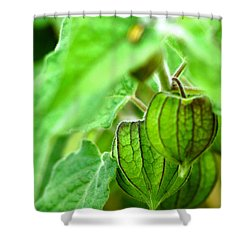 Poha Berry Lanterns Shower Curtain by Lehua Pekelo-Stearns