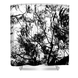 Shower Curtain featuring the photograph Poinciana Lace by Amar Sheow
