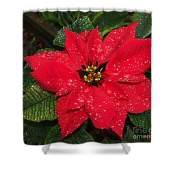 Poinsettia - Frozen In Time Shower Curtain