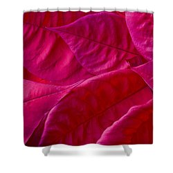 Poinsettia Leaves 1 Shower Curtain by Rich Franco