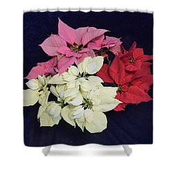 Poinsettia Tricolor Shower Curtain