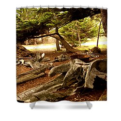 Point Lobos Whalers Cove Whale Bones Shower Curtain by Barbara Snyder
