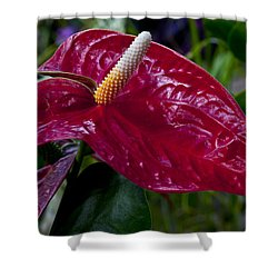 Pointed Shower Curtain by Doug Norkum