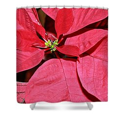 Shower Curtain featuring the photograph Pointsettia Flower by Judy Palkimas