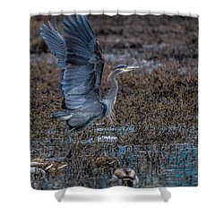 Poised For Flight Shower Curtain