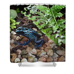 Poison Dart Frog Shower Curtain by Carol Ailles