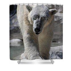 Polar Bear Balance Shower Curtain by DejaVu Designs