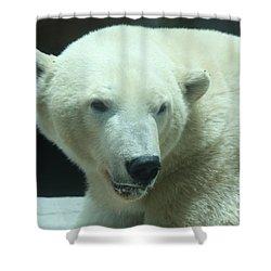 Polar Bear Head Shot Shower Curtain by John Telfer