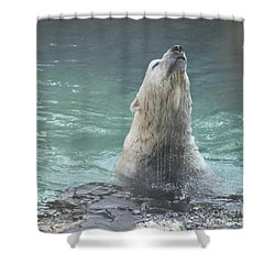 Polar Bear Jumping Out Of The Water Shower Curtain by John Telfer