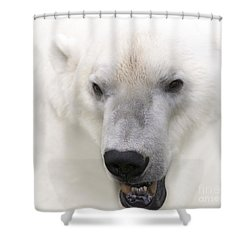 Polar Bear Portrait Shower Curtain by Heiko Koehrer-Wagner
