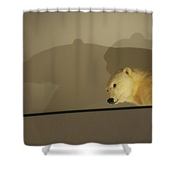 Polar Bear Shadows Shower Curtain