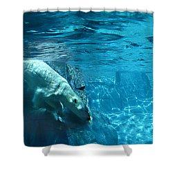 Polar Bear Shower Curtain by Steve Karol