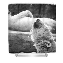 Polar Bears Shower Curtain by Michael Ver Sprill