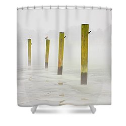 Poles Shower Curtain by Karol Livote
